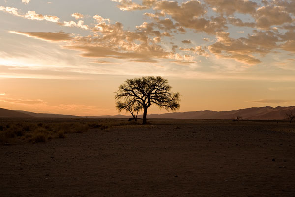 외롭게-서있는-나무