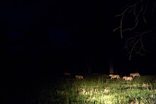 오카방고델타의-밤