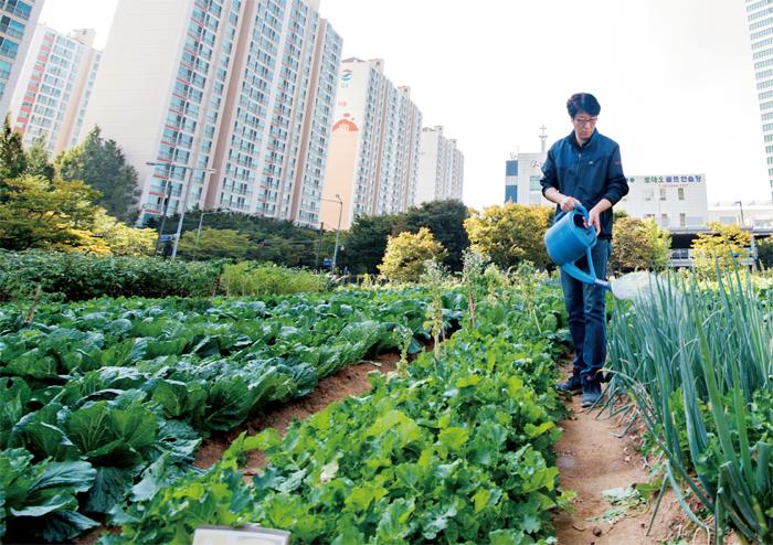 도시농업에 대한 이미지 검색결과